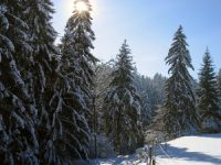 Winter+Schneelandschaft+1